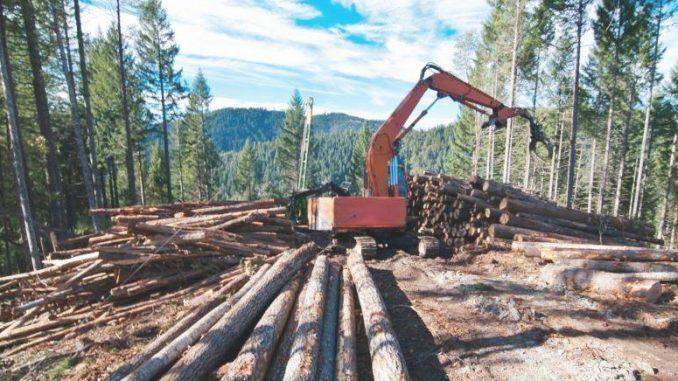 taglio-forestale-biomasse