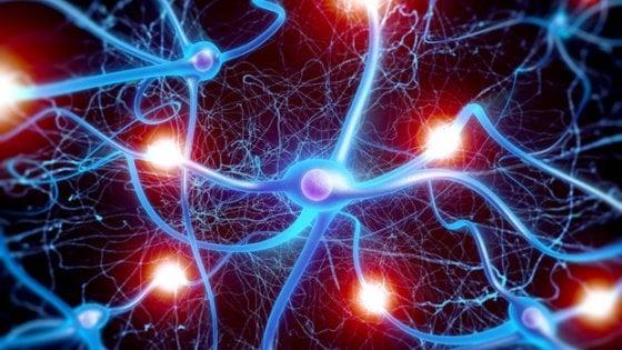 Fare ricrescere i neuroni n caso di spina dorsale danneggiata