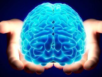 Influenza della proteina GSK3 nello sviluppo del cervello umano
