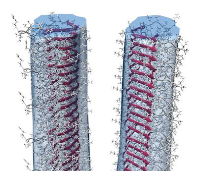 Modello del prione elaborato utilizzando la fisica quantiatica (fonte: INFN)