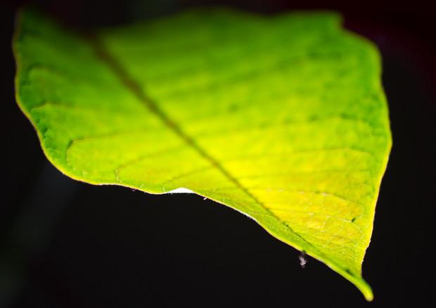 Riproduce il processo di fotosintesi di una foglia naturale, la foglia artificiale che sfrutta la CO2 per produrre metanolo (fonte: Nicola, Flickr)