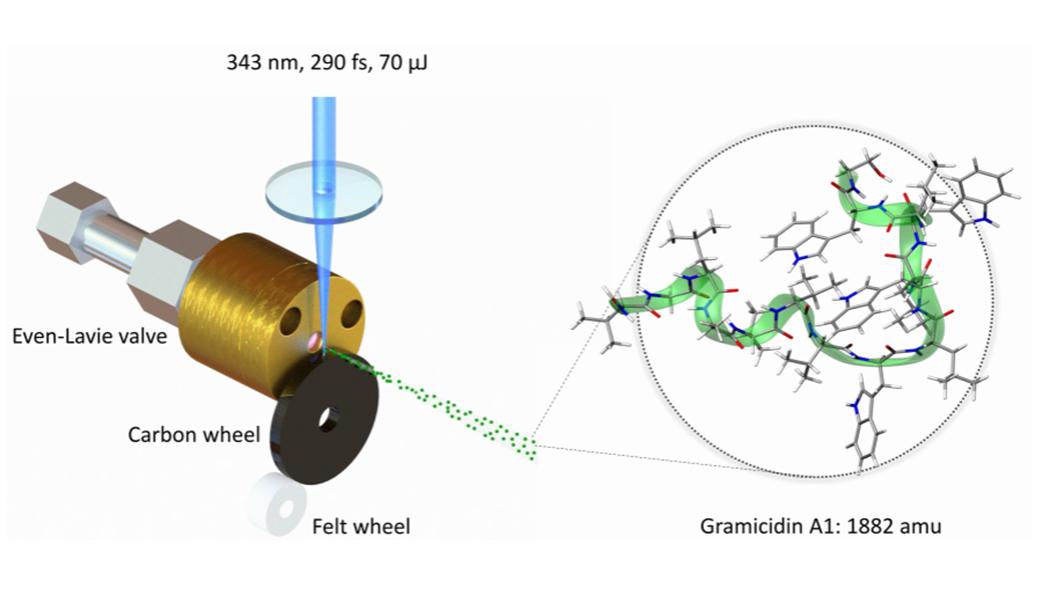 """Le biomolecole di gramicidina vengono """"espulse"""" grazie a impulsi laser ultracorti (Immagine: ArXiv, A. Shayeghi et al.)"""