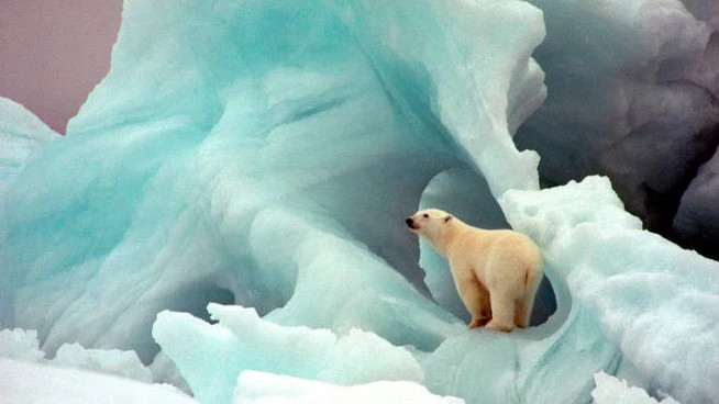 Riscaldamento climatico, a rischio i ghiacci polari (Ansa)