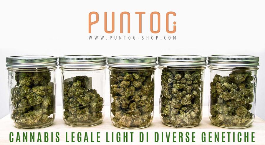 La vendita di cannabis legale sta rilevandosi un flop
