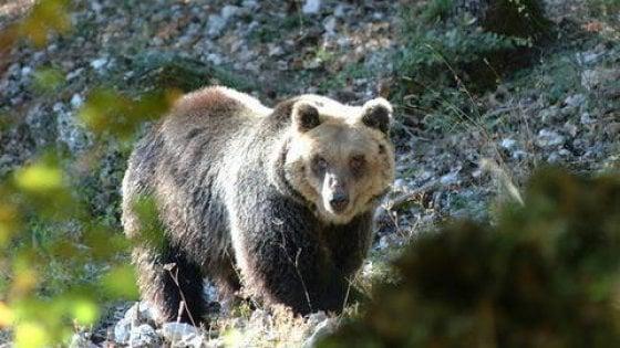 Foto di mamma orsa