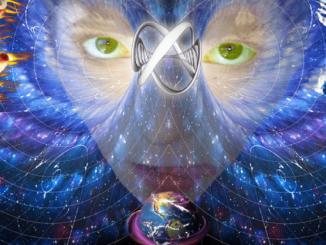 La coscienza risiede nel cervello e non nel tutto universale
