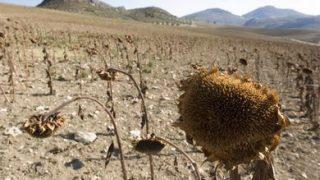 Gli effetti della desertificazione prodotta dal riscaldamento globale (© AGF)