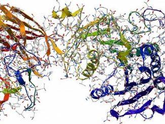 Allo studio di nuovi antibiotici per eliminare i super batteri