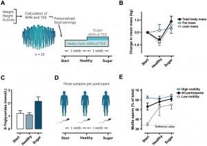 Il grafico E mostra il cambiamento nella motilità dello sperma prima dell'inizio della dieta, dopo una settimana e dopo due. Fai clic sull'immagine per ingrandirla.| CC NÄTT ET AL.