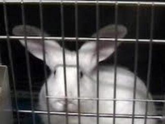 Dal milleproroghe uno stop alle sperimentazioni sugli animali