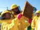L'inquinamento ambientale si trasferisce nel miele delle api