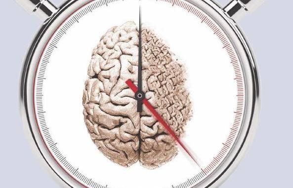 Studiato come il cervello trattiene i ricordi nel tempo