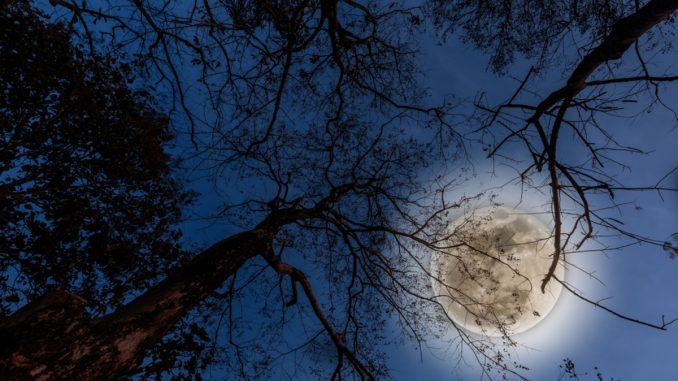 Superluna: arriva la luna piena più grande e più luminosa del mese di Marzo