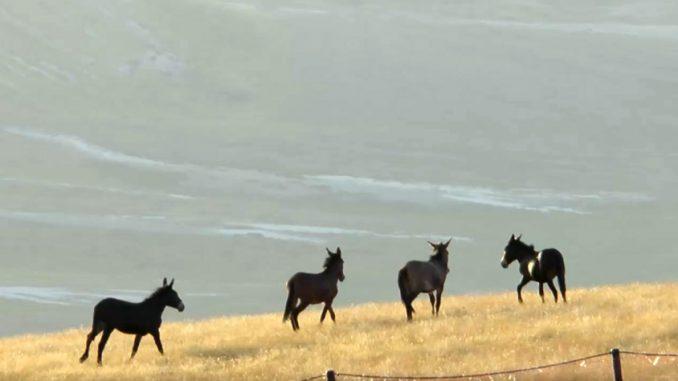 Cavalli a Campo Imperatore. Crediti: Media Inaf
