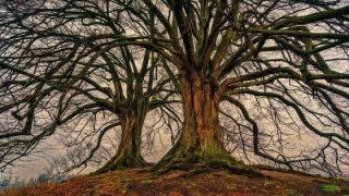 Giornata degli alberi, 820mila ettari di boschi nelle aree protette