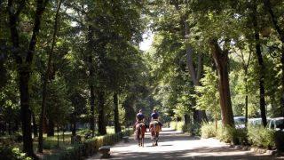 L'aria è più pulita con alberi ad altezze diverse, ed in tre file