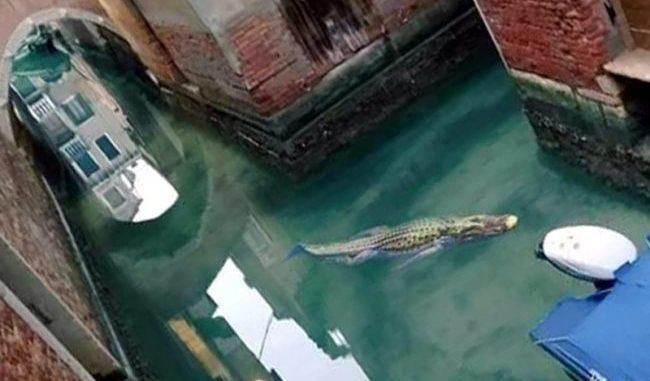 Avvistamenti nelle limpide acque della laguna di Venezia