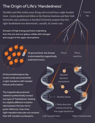 Schema che mostra come a partire dai raggi cosmici originati dal Sole e dalla nostra galassia si generino i muoni responsabili della ionizzazione mutagena preferenziale nel Dna destrogiro, che nel tempo sarebbe stato favorito dall'evoluzione. Crediti: Simons Foundation