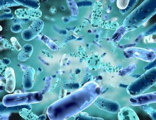 Se i batteri intestinali influenzano anche il cervello.