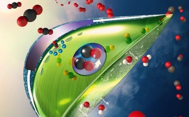 Convertire la luce solare in ossigeno con una foglia artificiale