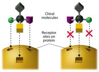 Illustrazione che mostra l'interazione delle molecole chirali con i recettori biologici. Crediti: Chemistry: Principles, Patterns, and Applications