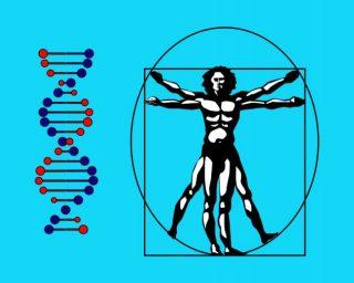 L'Uomo Vitruviano e l'elica del DNA: la biodiversità genetica degli italiani. | Alexator / Shutterstock
