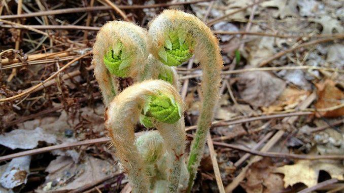 Prevedere matematicamente la crescita di una pianta