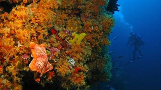 Oceani, il nostro futuro. Lo sviluppo sostenibile per salvarli