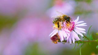 Sempre meno insetti impollinatori, scatta il piano per salvarli