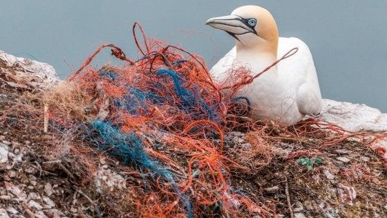 Le dimensioni di un animale ci dicono quale e quanta plastica deve temere