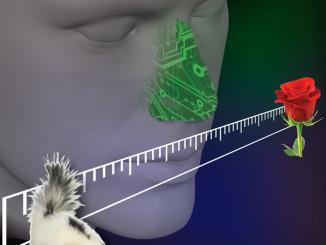 Input sensoriali dell'olfatto nella percezione degli odori