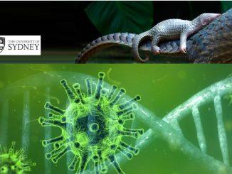 Coronavirus, studio Usa conferma il salto di specie