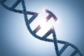 """Tecnica """"trova e sostituisci"""" vfCRISPR per le forbici genetiche"""