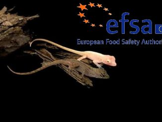 Efsa, valutazione dei rischi alla salute degli animali GM