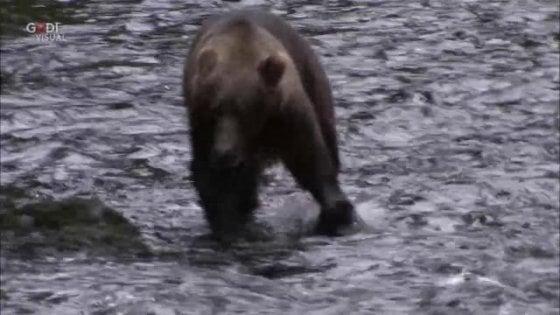Petizione online contro l'abbattimento del'orso bruno