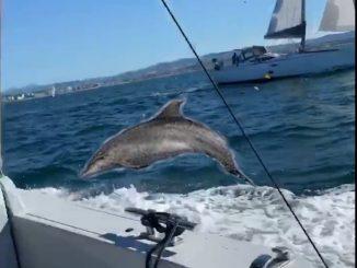 Liberato il capodoglio Spike dalla rete da pesca illegale