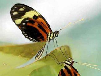 Supergeni adattativi permettono la sopravvivenza in vari habitat