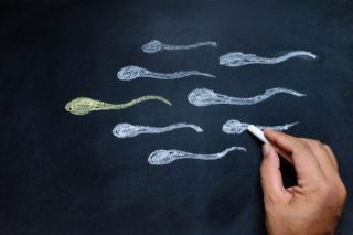 Moltiplicare gli spermatozoi per combattere l'infertilità maschile: nuove speranze dalle staminali. | Shutterstock