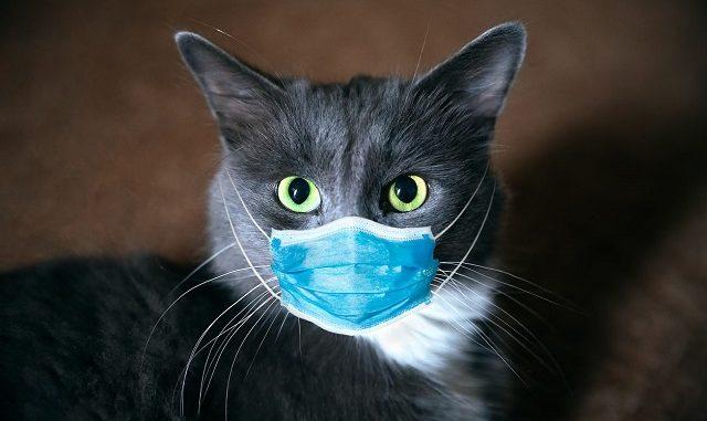 Anche i gatti possono contrarre e diffondere il coronavirus