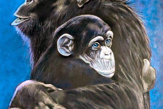 L'importante legame di uno scimpanzé alla propria madre