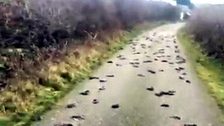 Migliaia di uccelli migratori cadono morti in New Mexico
