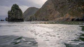 """Russia, misterioso """"disastro ecologico"""" in Kamchatka: morti il 95% degli animali marini"""