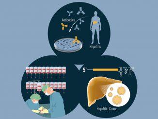 Nobel per la Medicina 2020 agli scopritori del virus dell'epatite C