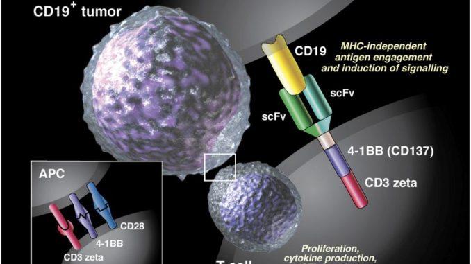 Terapia con CAR-T per i pazienti con leucemia linfoblastica acuta