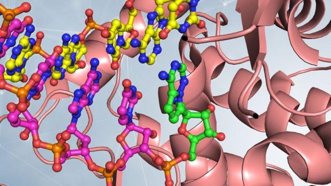 Scoperto ceppo di Sars-Cov-2 può reinfettare più gravemente