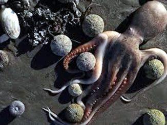 Migliaia di animali marini morti ritrovati in Kamchatka