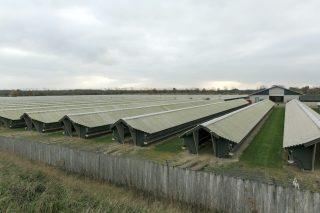 Un allevamento di visoni a Bording, Danimarca (Ole Jensen/Getty Images)