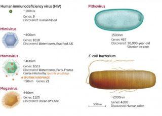 I virus giganti sono talmente grandi (spesso quanto molti batteri) da avere essi stessi i loro parassiti, come nel caso del Mamavirus, che può essere infettato dal virus Sputnik. |