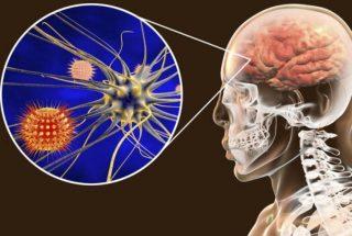 Il virus può entrare nel cervello passando dal naso