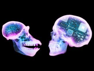 Quanto conta la materia grigia del cervello?